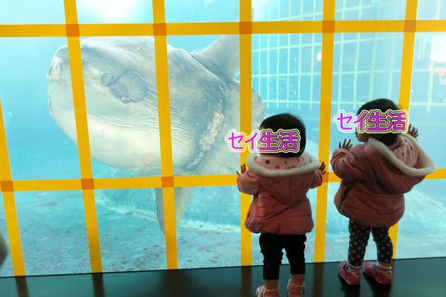 葛西臨海公園水族館 (10)