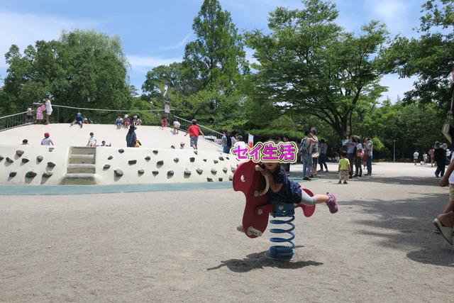 江戸川金魚まつり (8)