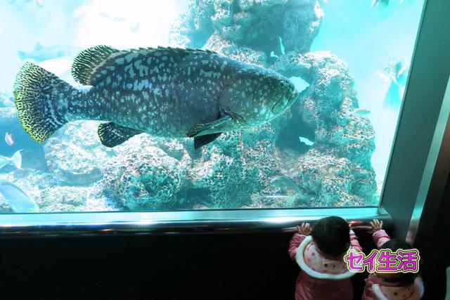 葛西臨海公園水族館 (13)