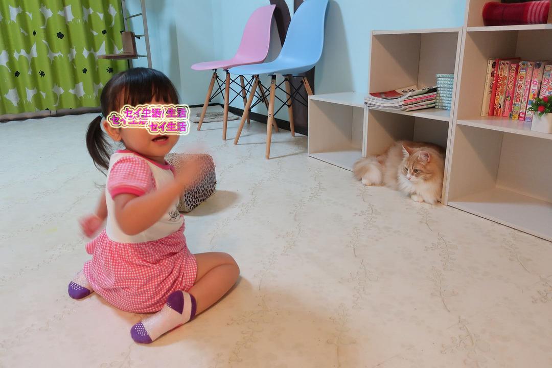 猫カフェ (28)