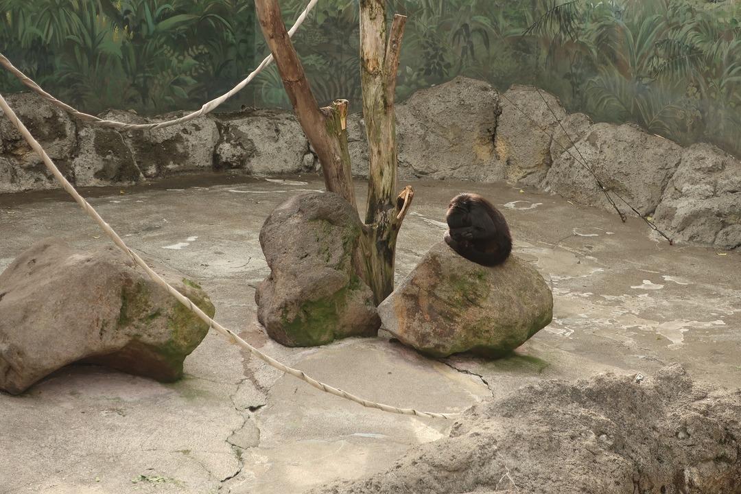 江戸川自然動物園 (8)