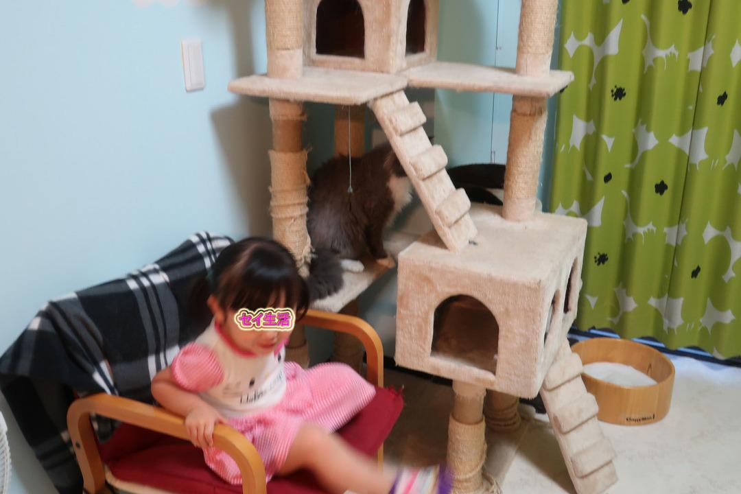 猫カフェ (17)