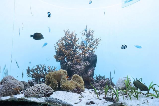 葛西臨海公園水族館 (19)