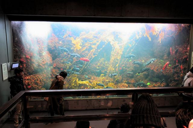 葛西臨海公園水族館 (25)