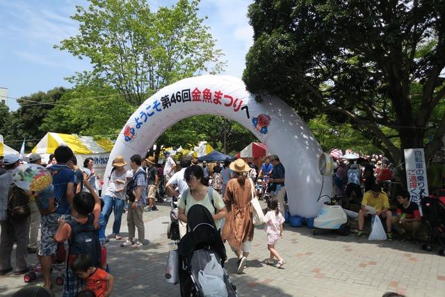 江戸川金魚まつり (10)