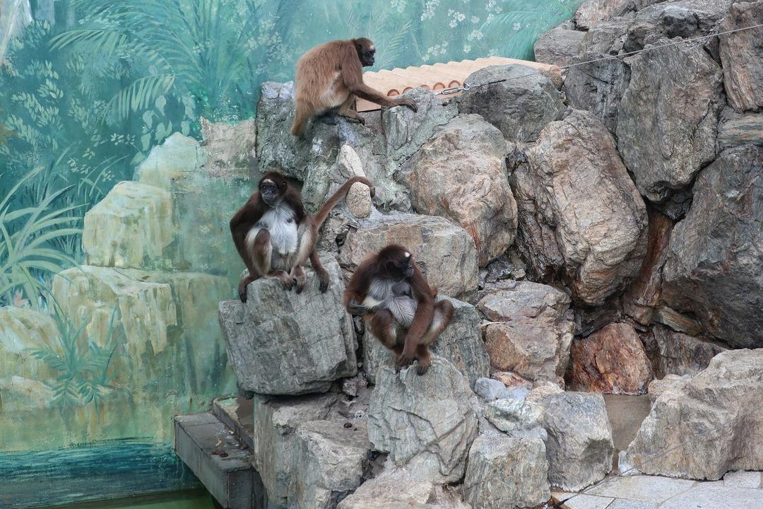 江戸川自然動物園 (12)