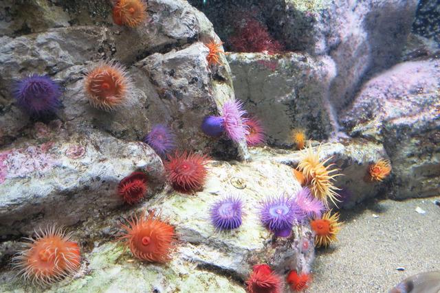 葛西臨海公園水族館 (21)