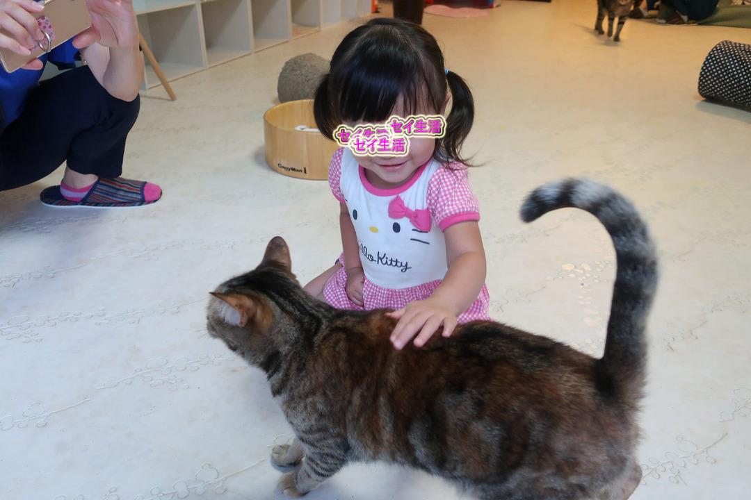 猫カフェ (6)