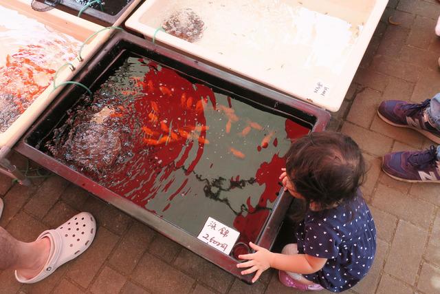 江戸川金魚まつり (14)