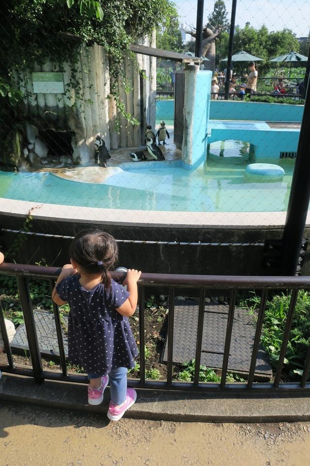 上野動物園 (10)