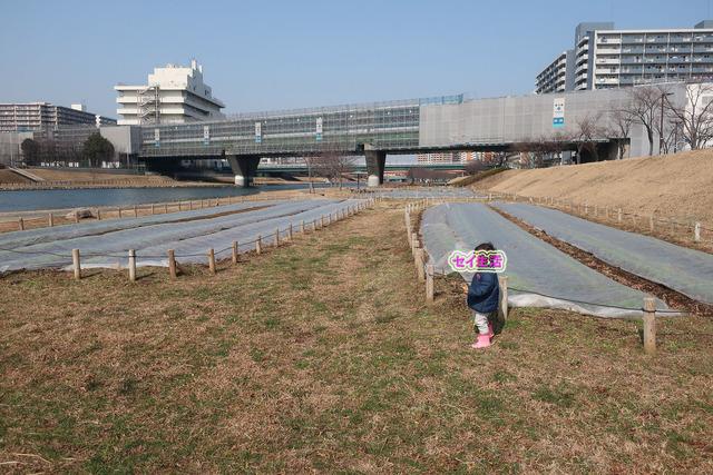 中川 (1)