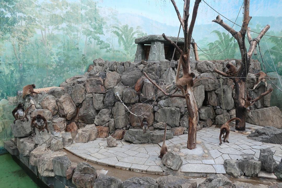 江戸川自然動物園 (11)
