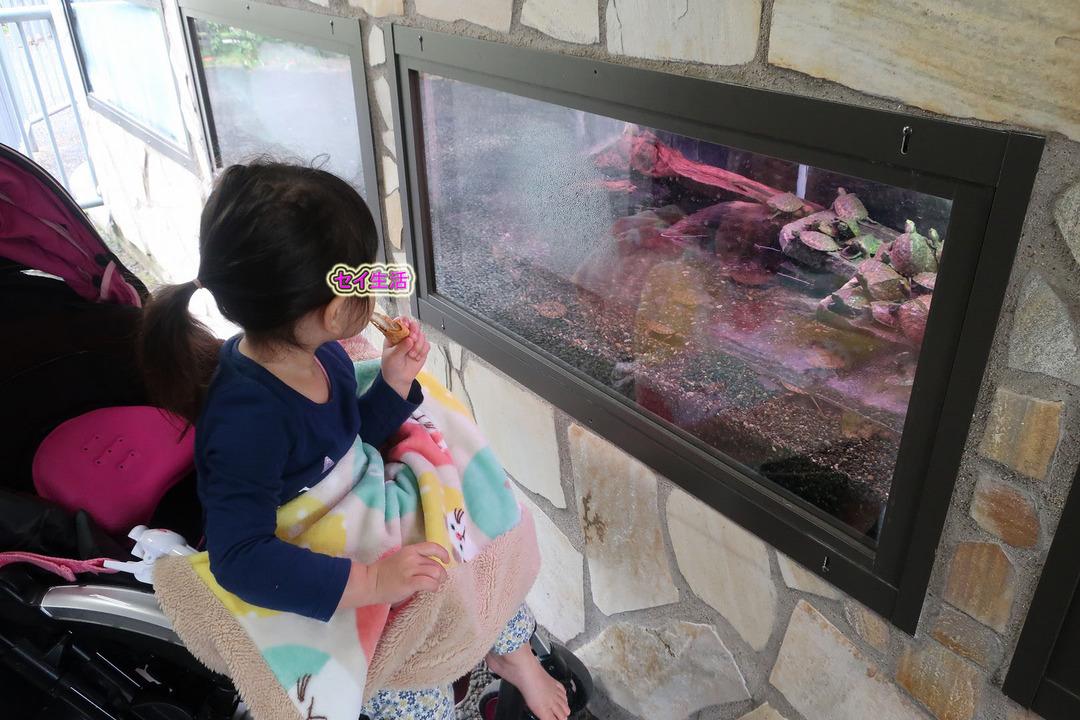 江戸川自然動物園 (9)