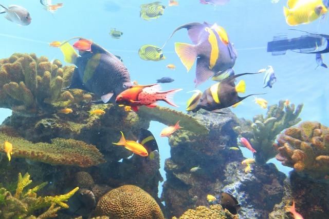 葛西臨海公園水族館 (20)