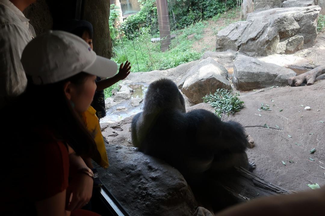 上野動物園 (12)