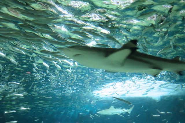 葛西臨海公園水族館 (31)