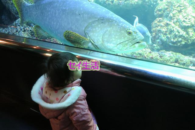 葛西臨海公園水族館 (16)