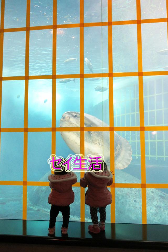 葛西臨海公園水族館 (12)