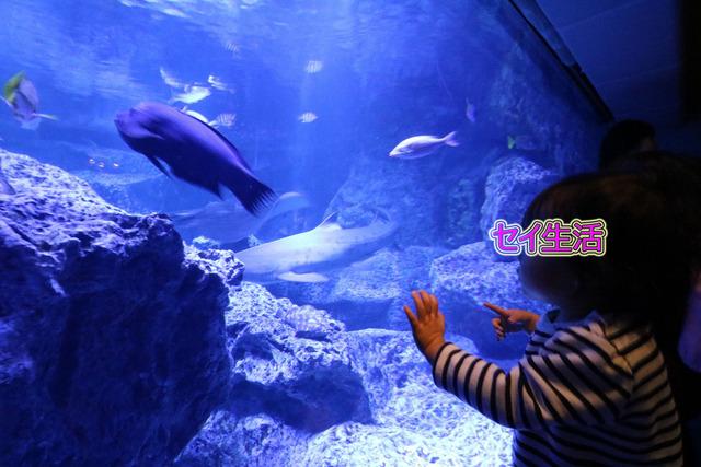 すみだ水族館 (9)