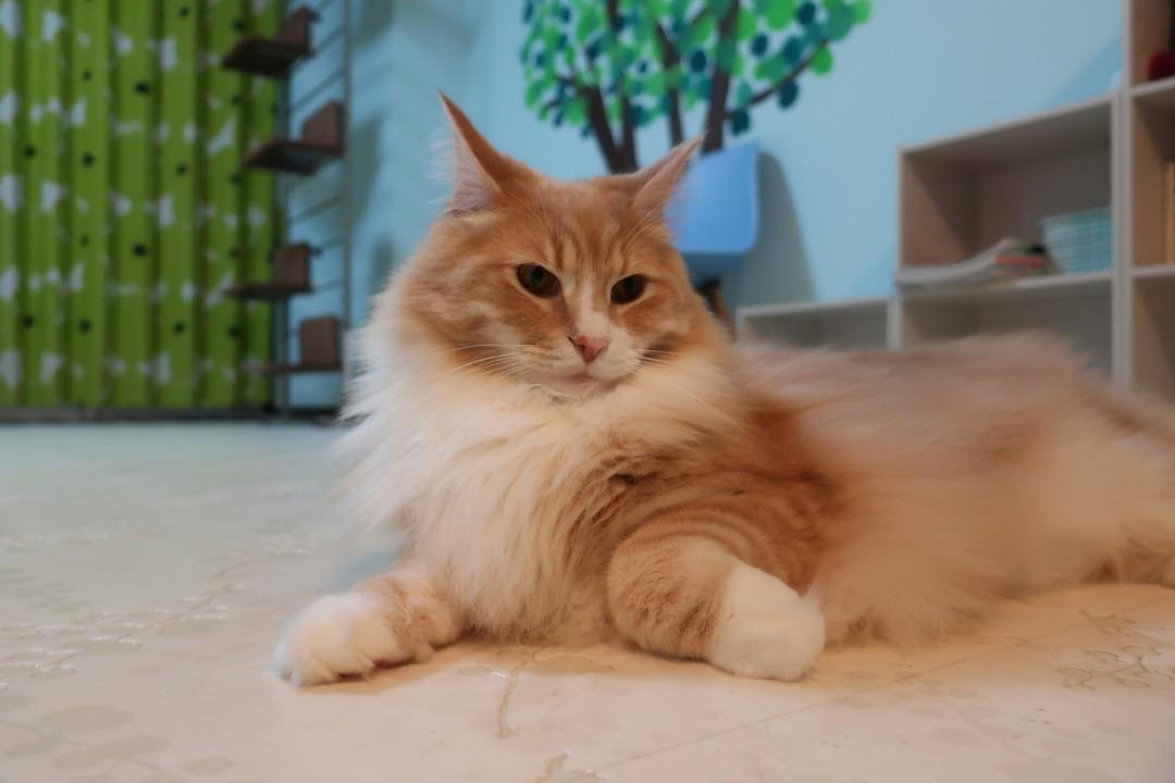 猫カフェ (25)