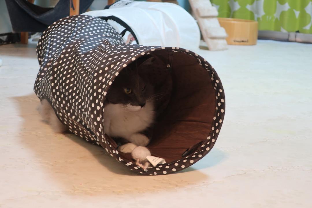 猫カフェ (21)