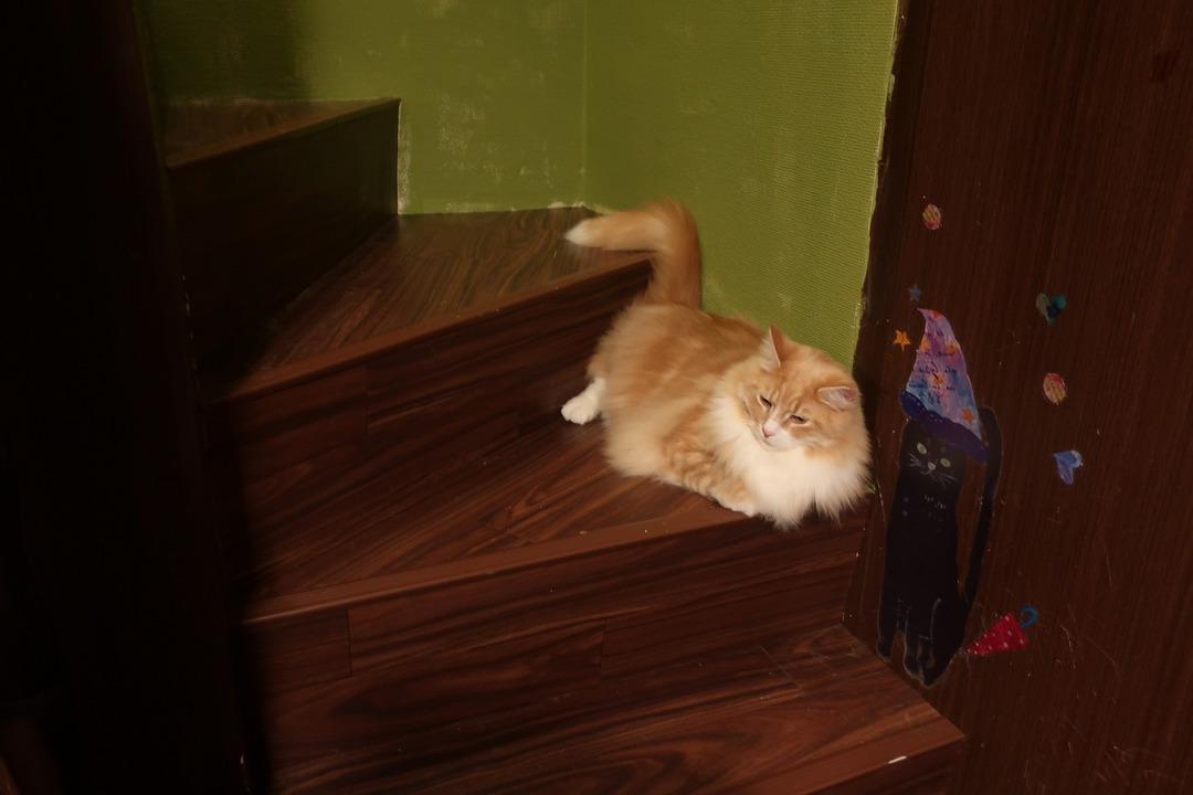 猫カフェ (29)