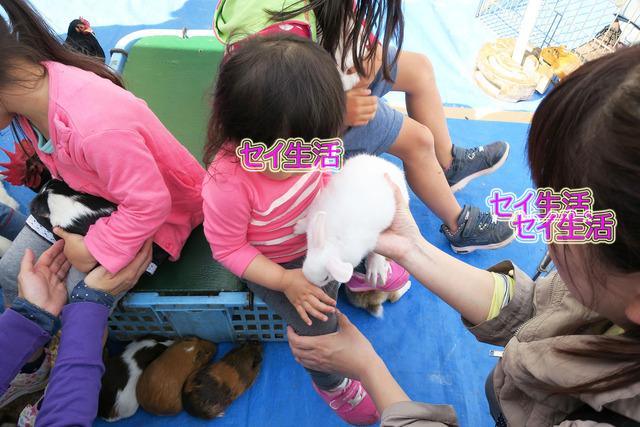 小さな動物園 (16)