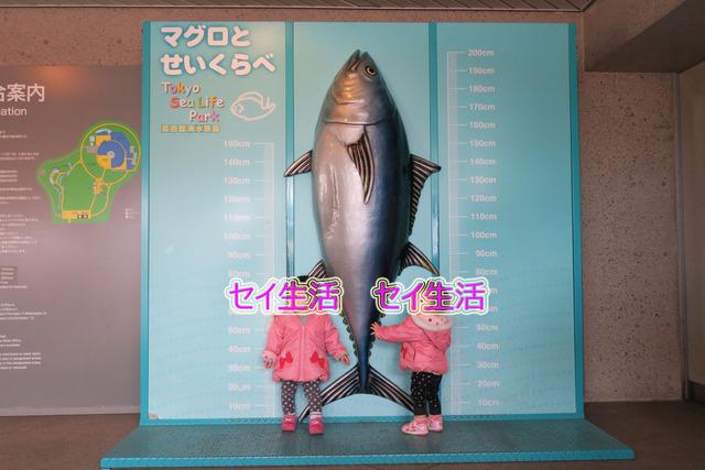 葛西臨海公園水族館 (4)