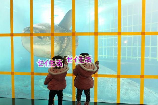葛西臨海公園水族館 (11)