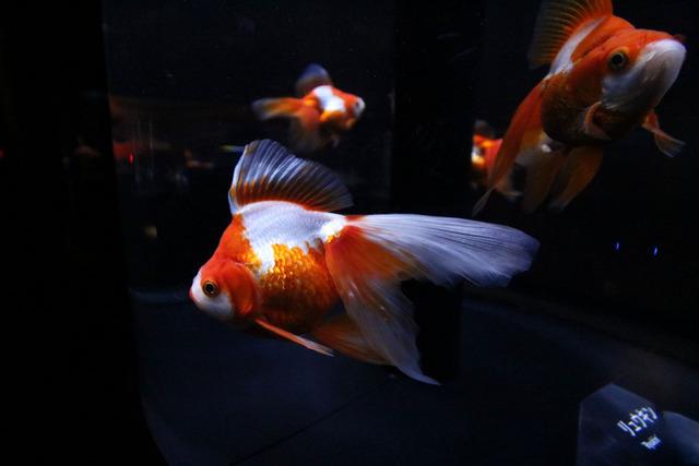 すみだ水族館 (24)
