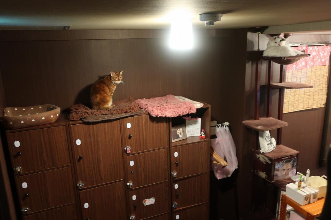 猫カフェ (10)
