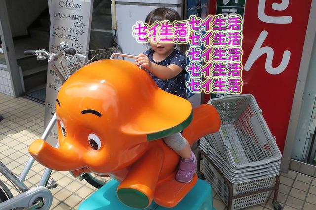 江戸川金魚まつり (1)