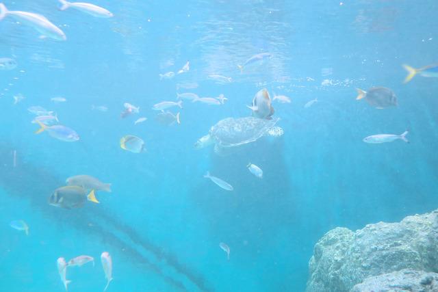 葛西臨海公園水族館 (28)