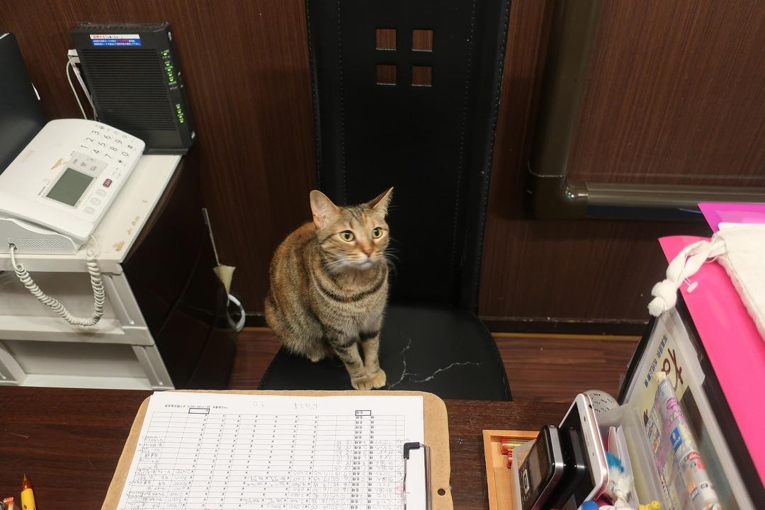 猫カフェ (13)