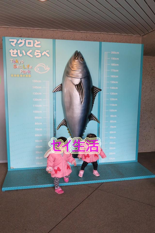 葛西臨海公園水族館 (5)