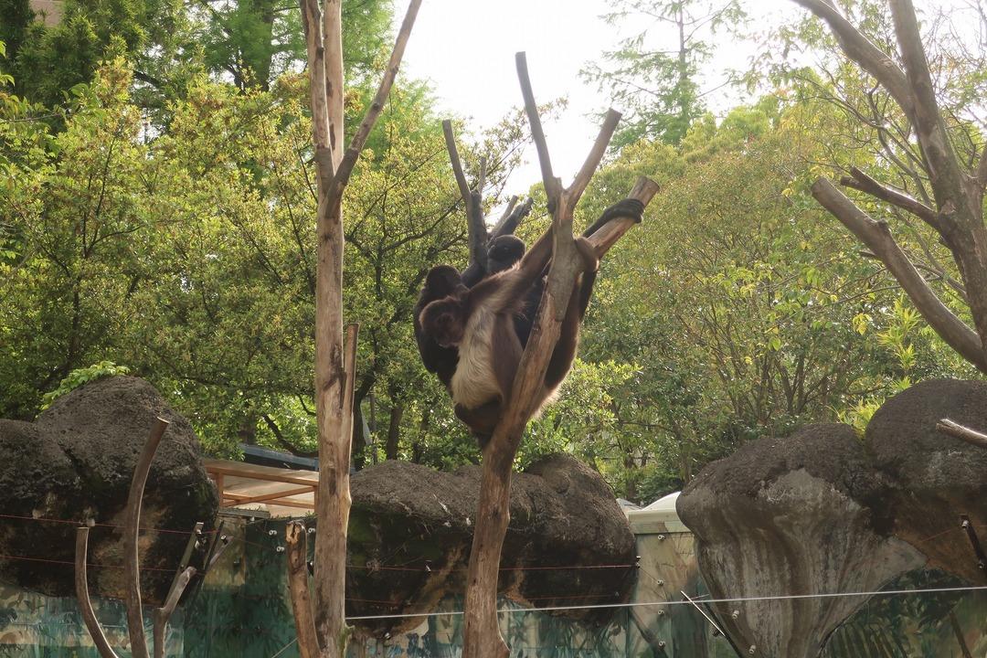 江戸川自然動物園 (7)