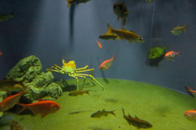 葛西臨海公園水族館 (23)