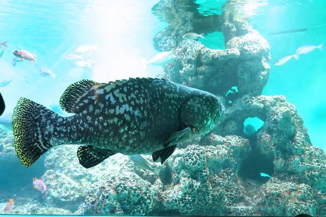 葛西臨海公園水族館 (14)