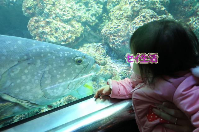 葛西臨海公園水族館 (15)