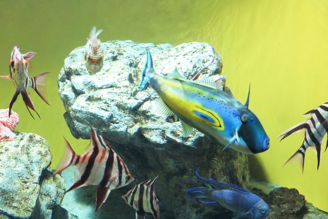 葛西臨海公園水族館 (18)