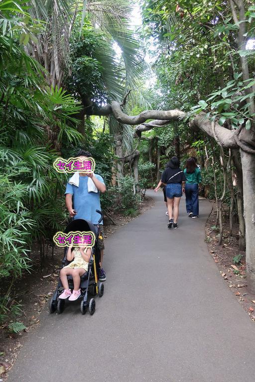 上野動物園 (14)