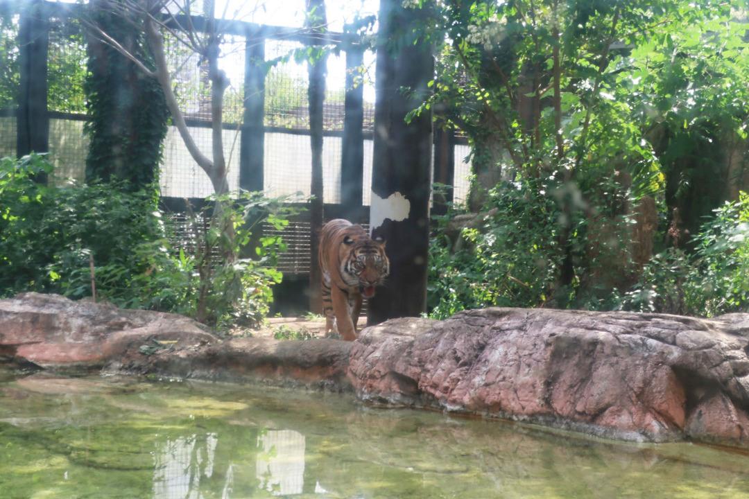 上野動物園 (9)