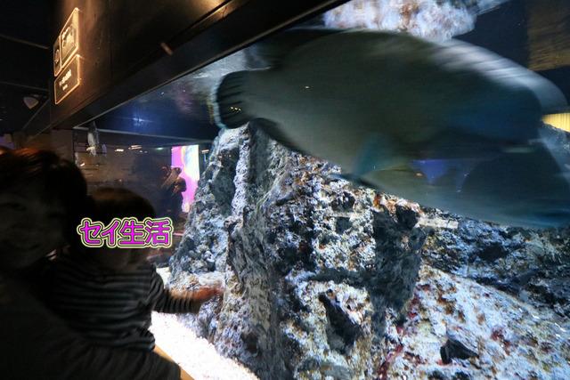 すみだ水族館 (12)