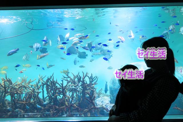 葛西臨海公園水族館 (22)