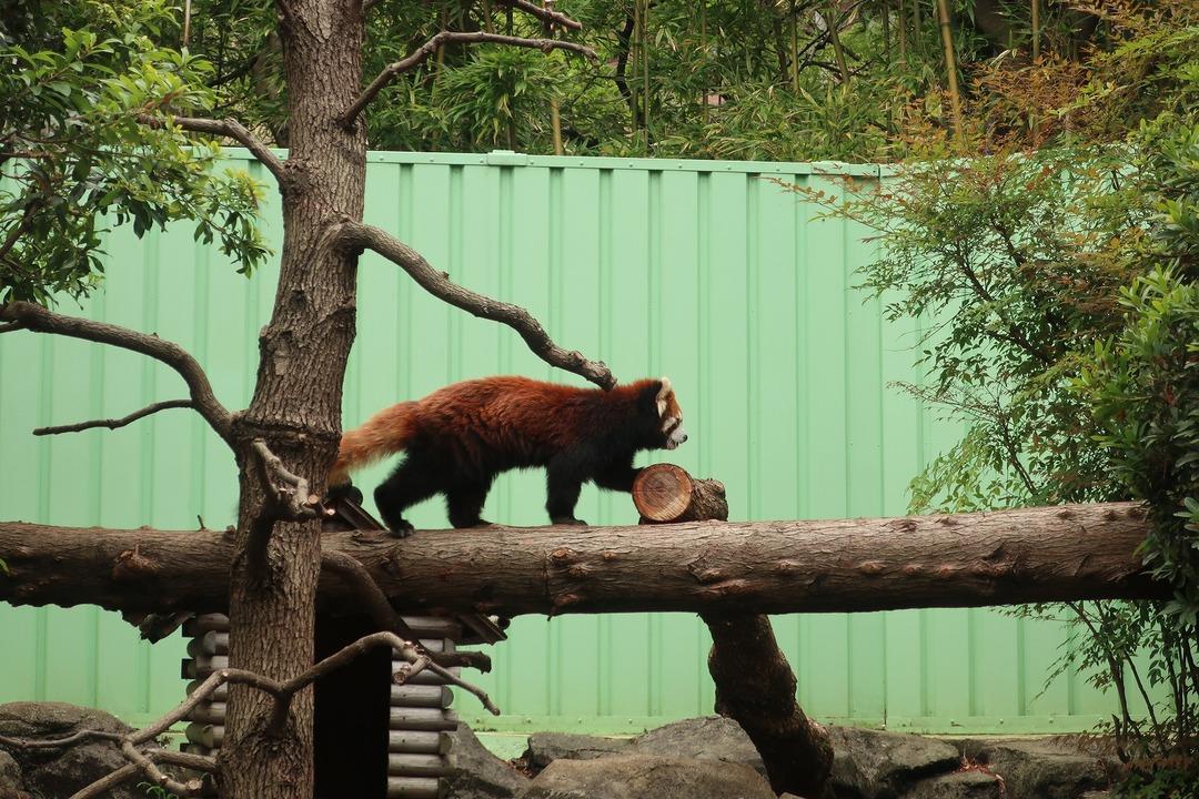 江戸川自然動物園 (4)