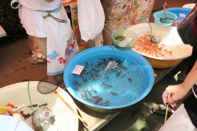 江戸川金魚まつり (12)