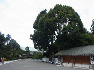 久遠寺 (11)