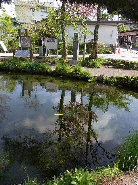 忍野八海 (7)