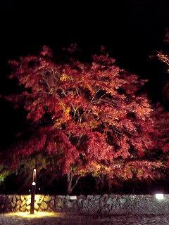 瀬音の湯の紅葉