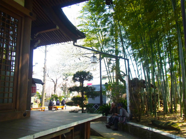 2012桜 (5)
